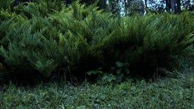 飞行在地面上的森林里 股票录像