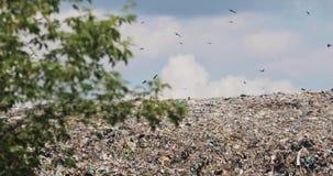 飞行在垃圾在第三世界的小山垃圾填埋的鸟在非回收县 影视素材