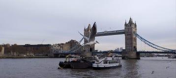 飞行在塔桥梁的海鸥 免版税库存图片
