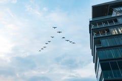 飞行在大厦附近的鸟群 免版税库存照片
