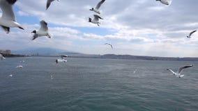 飞行在天空多云天的海鸥 影视素材