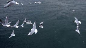 飞行在天空多云天的海鸥 股票视频