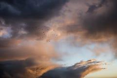 飞行在天空的一朵美丽的云彩的鸟,在日落在风暴以后 库存图片