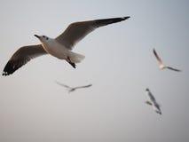 飞行在天空的鸟的谨慎 免版税图库摄影