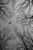 飞行在天空看见的鸟通过分支 免版税图库摄影