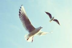 飞行在天空-自由的鸟 库存照片
