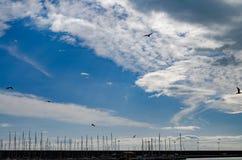 飞行在小游艇船坞的海鸥 免版税库存图片