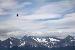 飞行在小猎犬海峡-乌斯怀亚,火地群岛,阿根廷的山的智利贼鸥鸟 免版税库存照片