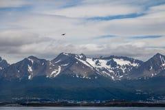 飞行在小猎犬海峡-乌斯怀亚,火地群岛,阿根廷的山的智利贼鸥鸟 免版税库存图片