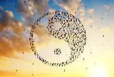 飞行在尹杨形成的鸟在日落天空 图库摄影