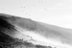 飞行在山和小山的鸟群盖由薄雾 免版税库存图片