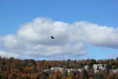 飞行在山的老鹰在纽约州 库存图片