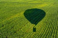 飞行在年轻玉米的领域的气球的阴影 库存照片