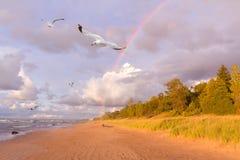 飞行在彩虹旁边的海鸥 库存照片