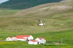 飞行在房子的海鹦 免版税图库摄影