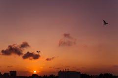 飞行在日出的两只鸟 库存照片