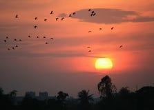 飞行在日落的剪影鸟 库存照片