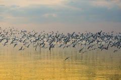飞行在日落的海鸥 图库摄影