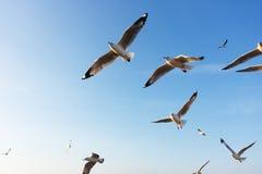 飞行在日落的鸟,滑动 库存照片