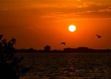 飞行在日落的鸭子 免版税库存图片