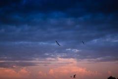 飞行在日落 图库摄影