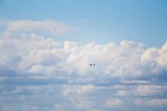 飞行在早期的春天的两只美丽的鹅环境美化 库存照片