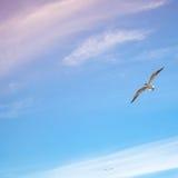 飞行在明亮的多云天空背景的海鸥 免版税库存照片