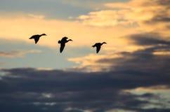飞行在暗淡的天空的三只鸭子剪影在日落 免版税库存图片