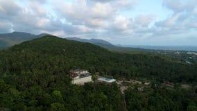 飞行在有棕榈树的美丽的豪华的绿色密林上 股票视频