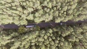 飞行在有生长双方的密集的森林汽车移动的绿色树的老被修补的双线道森林公路的鸟瞰图  股票录像