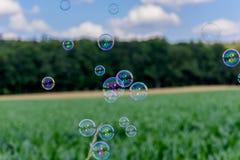 飞行在木头前面的一块麦地的一束不可思议的光亮的肥皂泡 库存照片