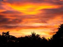 飞行在树的五颜六色的日落期间的鸟的图象 免版税图库摄影