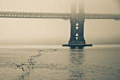 飞行在桥梁下的鸟群  免版税库存图片
