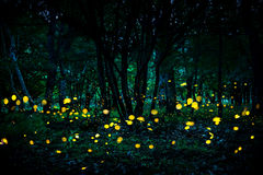 飞行在森林里的萤火虫在微明 库存照片