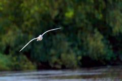 飞行在池塘树的鸟在背景中 免版税库存照片