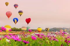 飞行在波斯菊花的五颜六色的热气球 库存照片