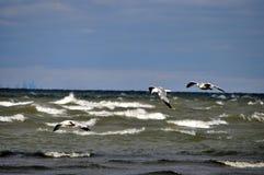 飞行在波浪上 免版税库存图片