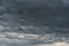 飞行在波罗的海的海鸥在拉脱维亚,利耶帕亚 多云风雨如磐的蓝天在背景中 免版税图库摄影