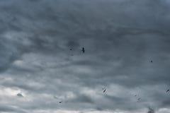 飞行在波罗的海的海鸥在拉脱维亚,利耶帕亚 多云风雨如磐的蓝天在背景中 库存照片