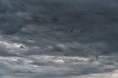 飞行在波罗的海的海鸥在拉脱维亚,利耶帕亚 多云风雨如磐的蓝天在背景中 库存图片