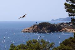 飞行在海、小船和树的鸟 免版税库存图片