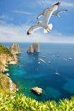 飞行在海岛卡普里上的Faraglioni峭壁附近的海鸥 免版税库存图片