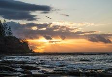飞行在海岸线的鸟在日出 免版税库存照片