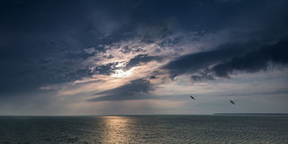 飞行在海晚上的浩瀚的两只鸟 免版税库存图片