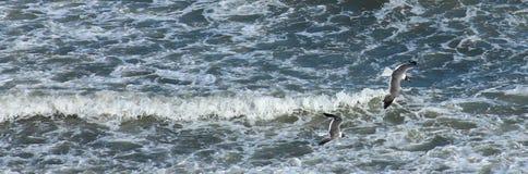 飞行在海浪的两只海鸥 库存照片