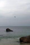 飞行在海的一只大鸟 图库摄影