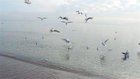 飞行在海的海鸥群在海滩冬天附近 股票录像