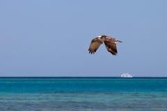 飞行在海的白鹭的羽毛 免版税库存图片