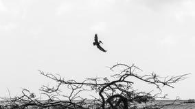 飞行在海的鸟 免版税库存图片