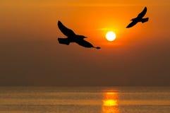 飞行在海运剪影的鸟 库存图片